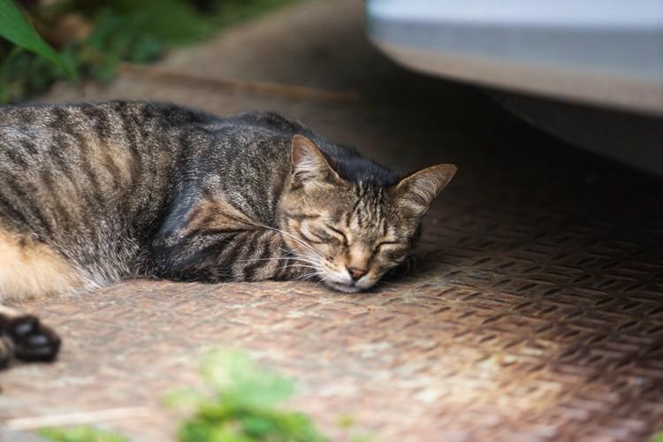 猫が寝ている