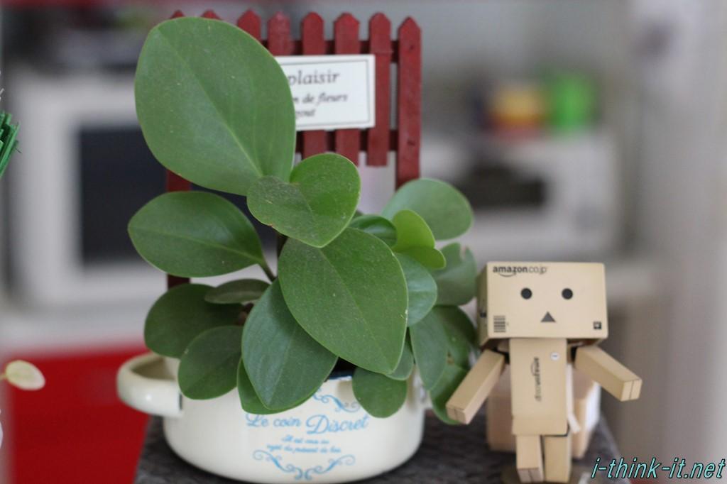 デスクに観葉植物を置いてる人っているよね。観葉植物を置くメリット/デメリットってあるのかな?