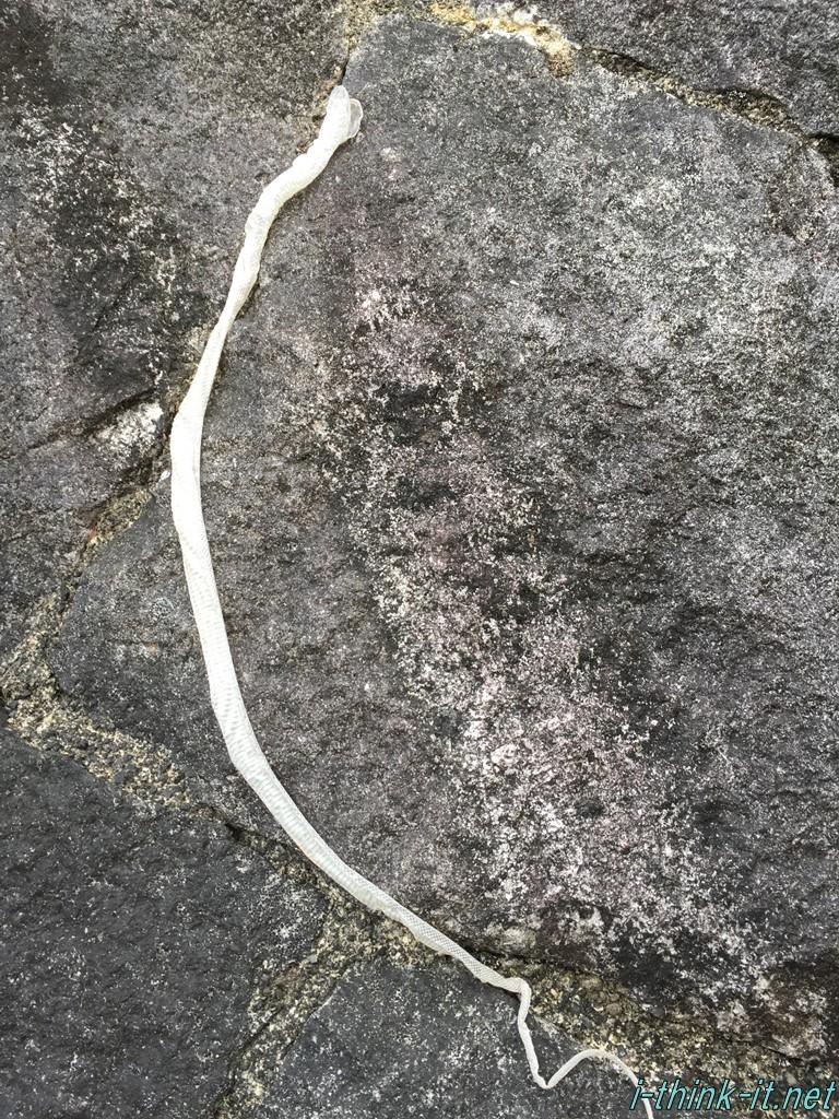 石垣にくっついた蛇の抜け殻