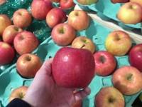 美味しいリンゴの選び方。どうせ買うなら美味しいリンゴでしょー♪