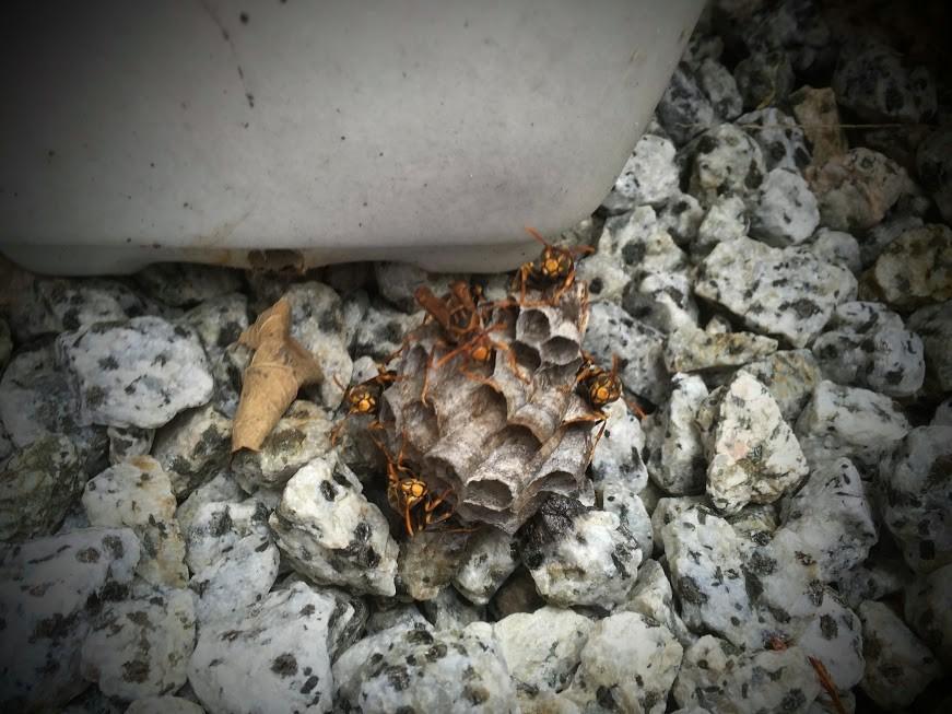 蜂の巣を駆除した時の話。どうやら蜂は地面にも巣を作るらしい。