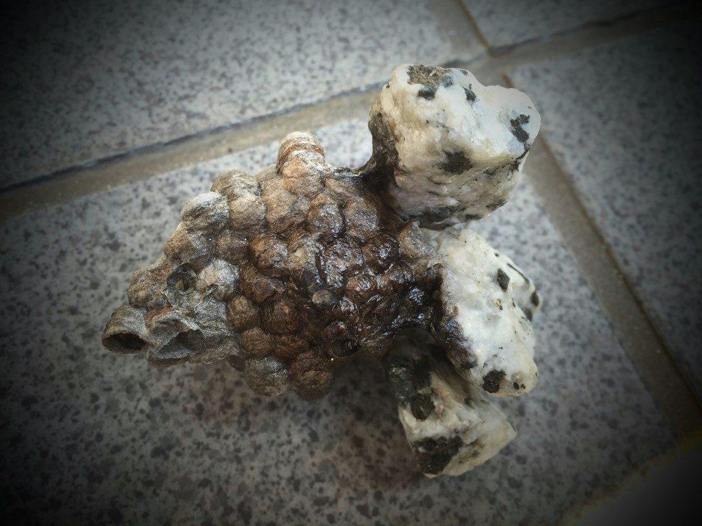 石ころに固定された蜂の巣