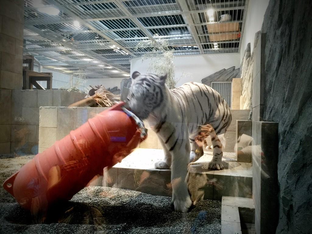ニフレルに潜入!水族館と動物園が合体したアートな施設だったよ!【後編】